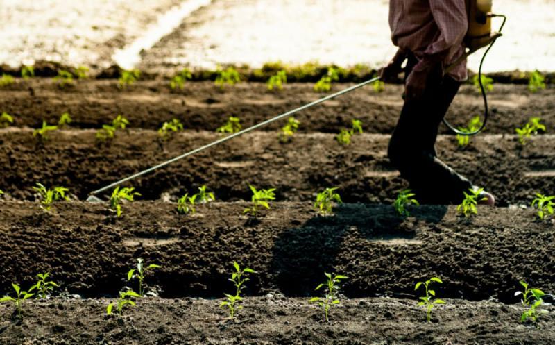 グリホサートだけじゃない。海外で禁止され日本で使用されているクロルピリホスなどの農薬・殺虫剤の危険性。