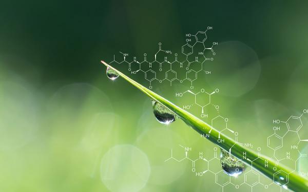世界中で使用率ナンバー1の除草剤「ラウンドアップ」に発がん性リスク!?主成分グリホサートは危険か安全か