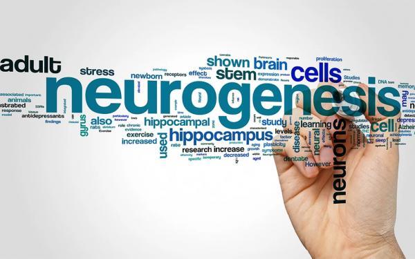 何歳になっても脳を成長させ続けることができる!? 脳と心を強靭にするニューロン新生