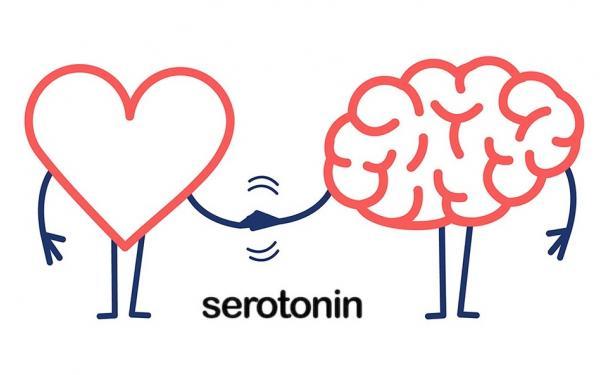 心と脳の栄養 「セロトニン」をサプリで増やすには?