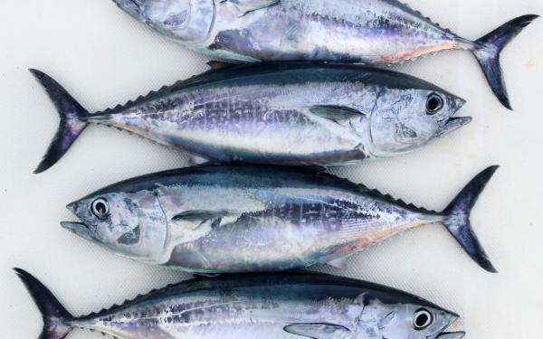 魚介類の食べ過ぎは水銀汚染のもと!?そのリスクを避ける方法とは